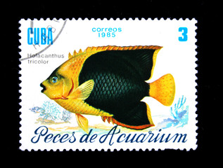 fish Holocanthus tricolor