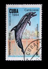delfin Manchado