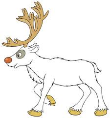 Foto op Plexiglas Sprookjeswereld Reindeer