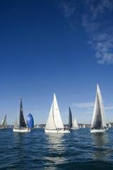 Segelboote vor Sydney