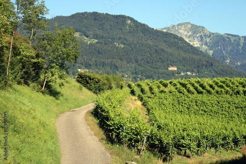 Fototapete Vigne ne montagne suisse