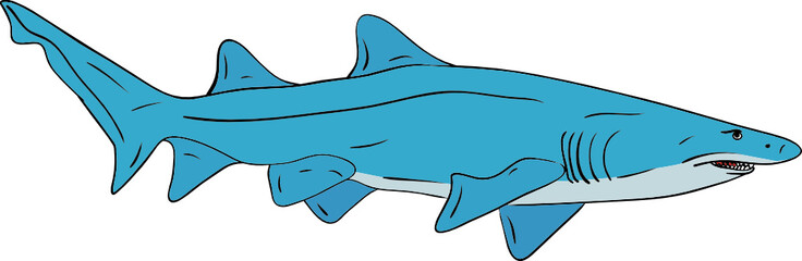 vector - big shark isolated on background