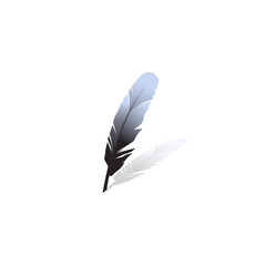 Black feather.Vector illustration