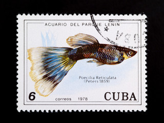 Poecilia reticulata stamp