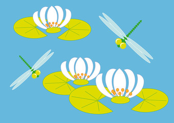 dragonflies and lily