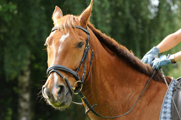 Pferde 25