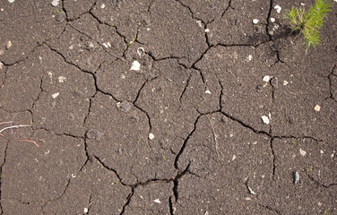 Texture of cracked soil in hot summer day