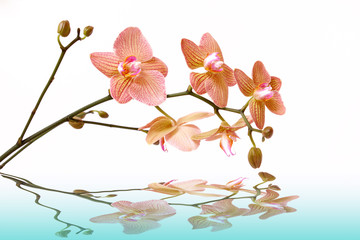 Door stickers Orchid wasser,orchidee