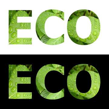 Textured Word Eco