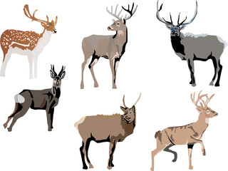 six color deers