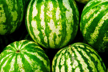 Ripe big water-melons with a green striped skin