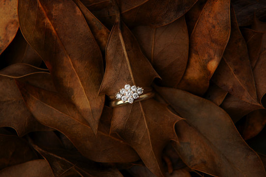 engagement and wedding ring, autumn wedding concept
