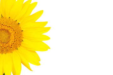 Half of the sunflower isolated on white