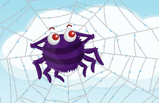 scenic spider