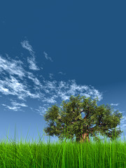 High resolution green grass over a blue sky with white clouds