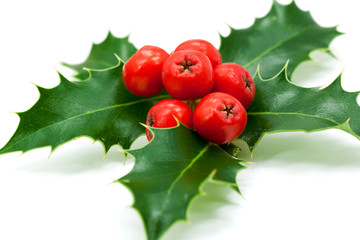 Holly Leaves and Berries,isolated on white