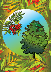 Rowan tree and its branch in the oval. Vector art-illustration.