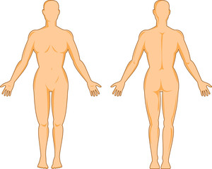 Female human anatomy front and back