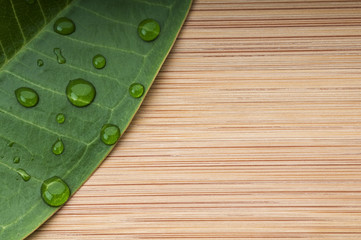 Green leaf with rain droplets on the bamboo background