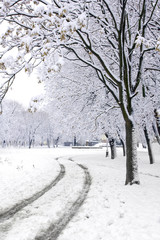 Winter road in park