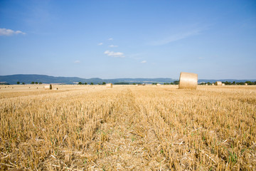 Background with cornfield