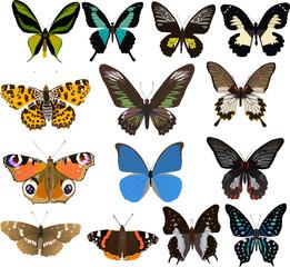 fourteen color butterflies
