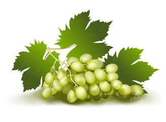 Grapes. Vector illustration.