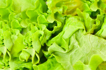 Cabbage background