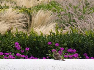 oiseau dans le massif