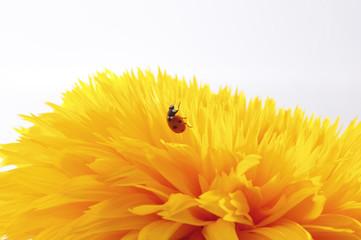 Sonnenblume mit Marienkäfer 3