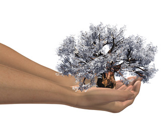 white 3D baobab tree held in hands by an adult male