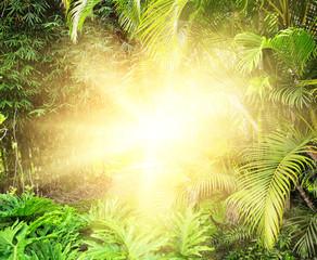 Sunshine in a jungle