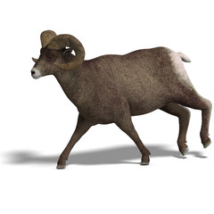 big horn sheep aries