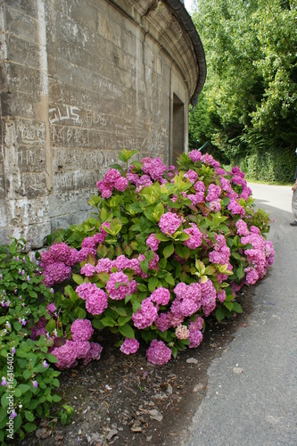 Parterre de fleurs roses stock photo and royalty free images on pic 16416402 for Parterre de roses photos
