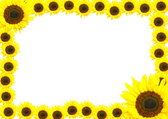 Frame made of sunflowers.