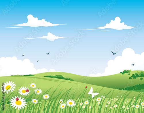 рисунок поля с цветами карандашом