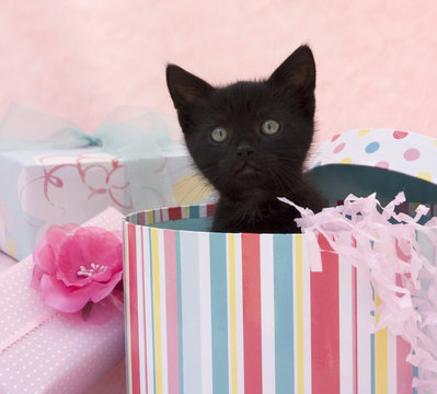 kitten popping out of a birthday box