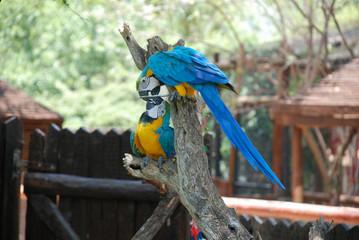 two tropical parrots having fun