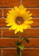 Sunflower in the bottle