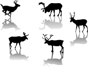 five deers with reflections