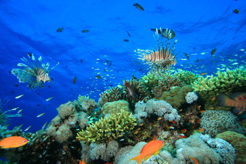 Coral Reef and a variety of tropical fish