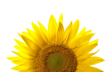 Close-up of a sunflower isolated on a white background.
