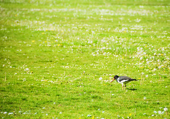 Bird in meadow
