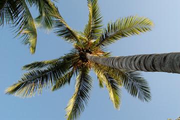 Palme von unten