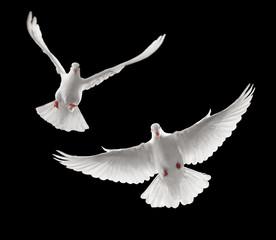 Wall Mural - doves flying