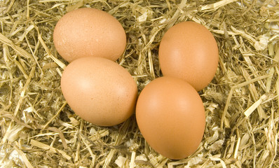four freshly laid chicken eggs on hay and straw