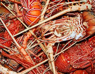 Lobster background