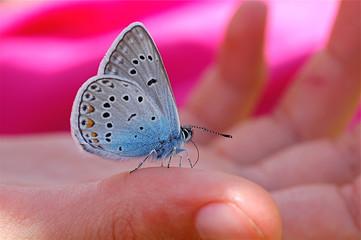 La farfalla e la bambina