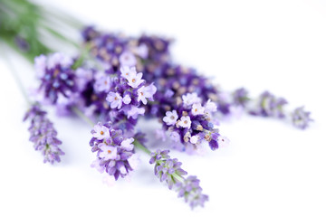 Photo Blinds Lavender Fleurs de lavande