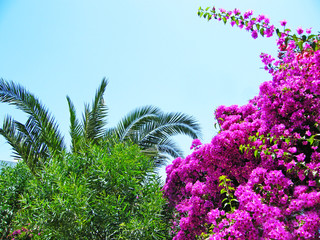 flowers with palm